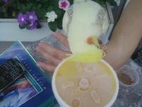 Puck loves orange juice!